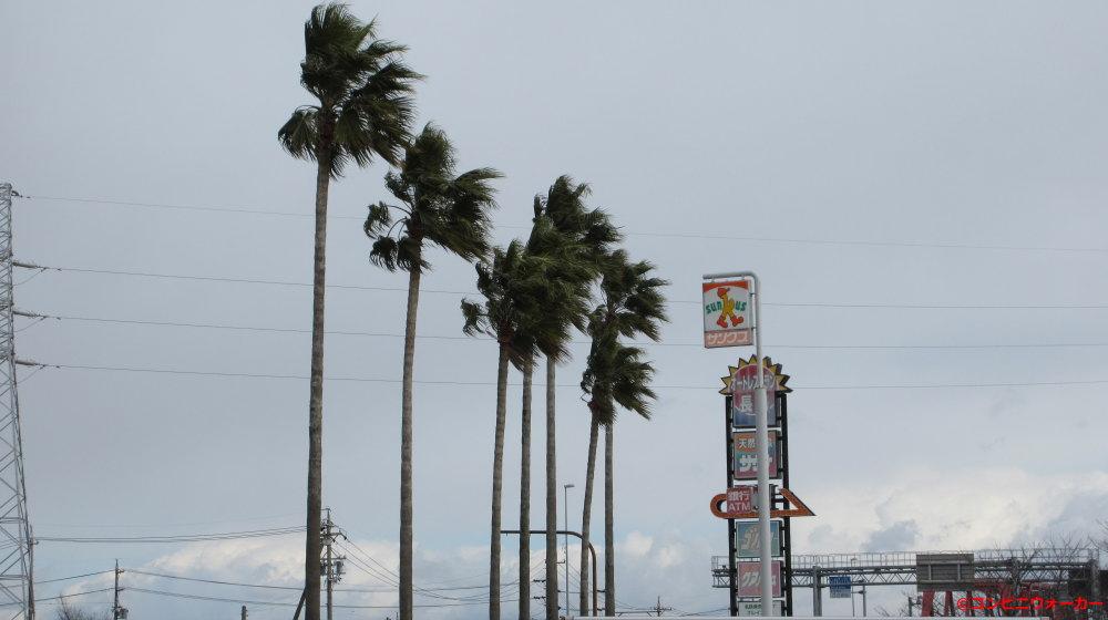 サンクス長島店 ヤシの木とポール看板